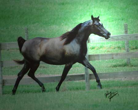 This mare is a MOVER! Picture taken while pregnant, thus showing only a fraction of what she can do!